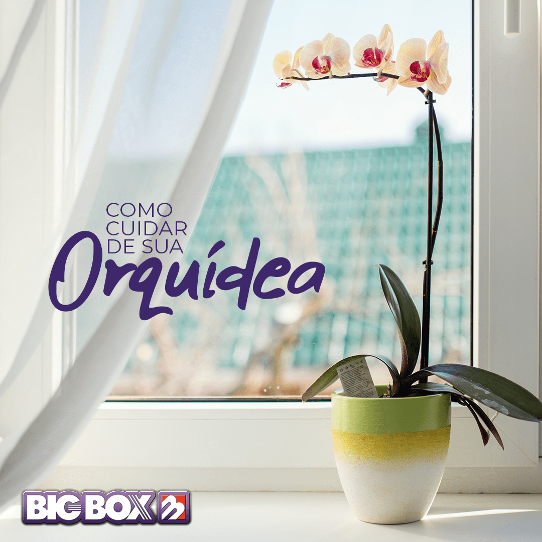 DICAS: Como Cuidar de sua Orquídea